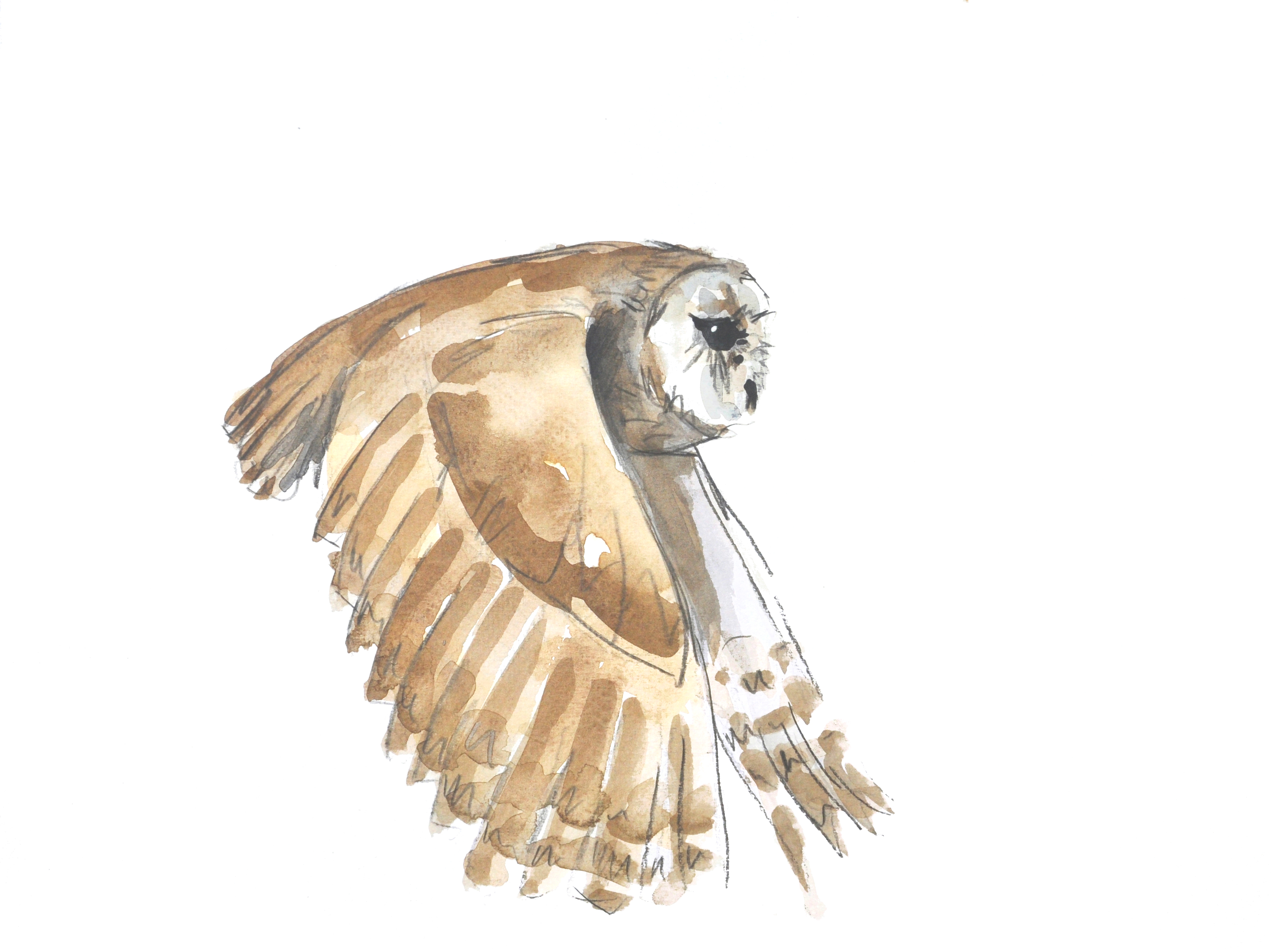Tawny Owl Wildbird Watercolour Painting.