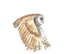 Tawny Owl Wildbird Watercolour Painting.