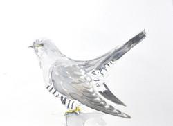 Cuckoo Wildbird Watercolour Painting