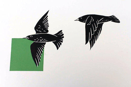 Starlings pair with a green square