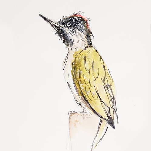 Green Woodpecker Sketch