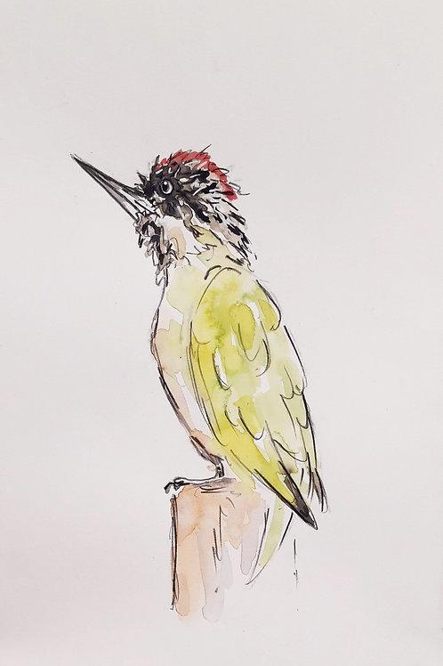 Green Woodpecker for Samantha