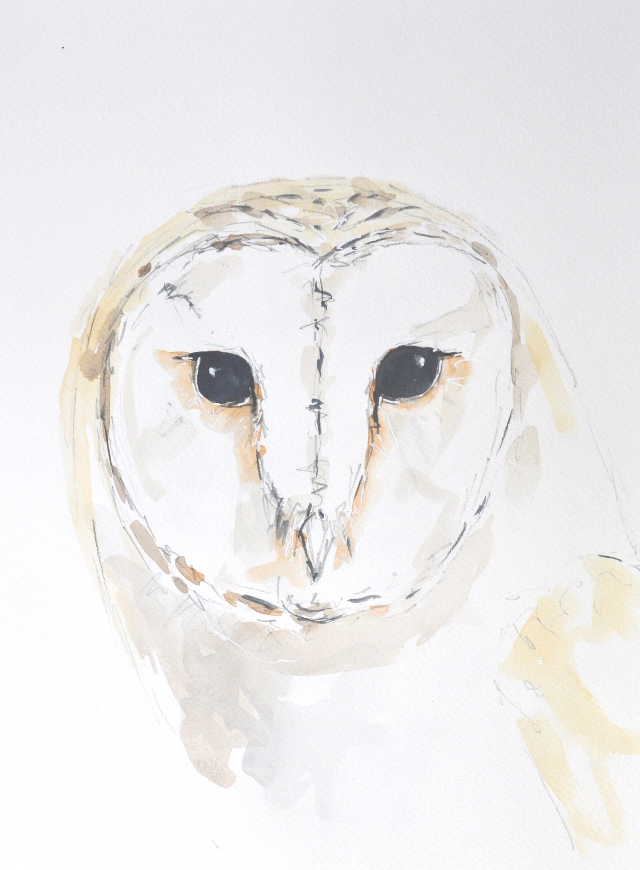 Wildbird Watercolour Painting (16)