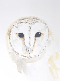 Wildbird Watercolour Painting (16)