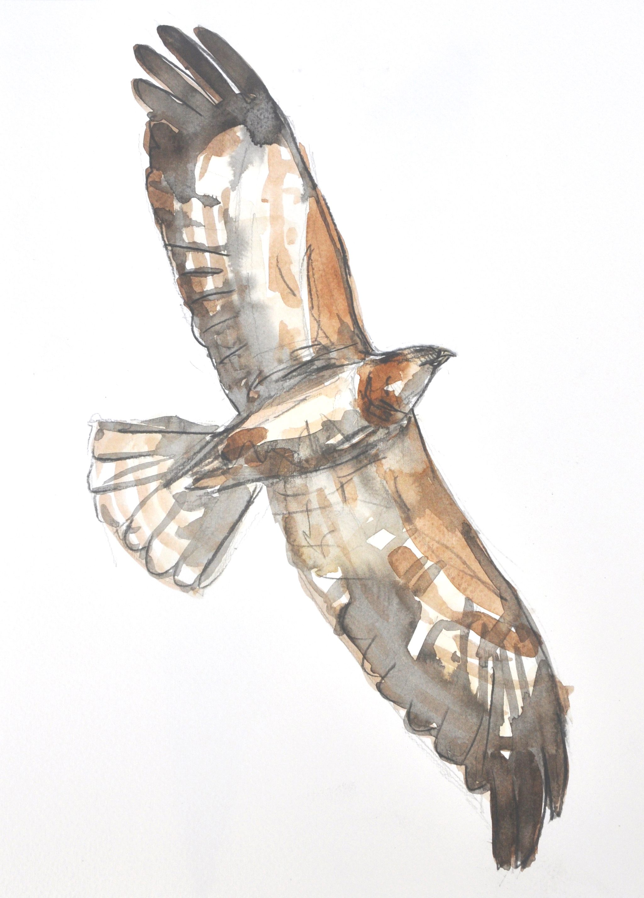 Buzzard Wildbird Watercolour Painting