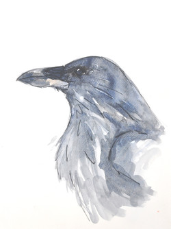 Raven Wildbird Watercolour Painting