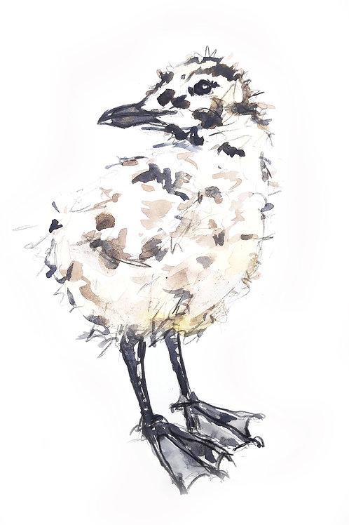 Gull Chick Sketch
