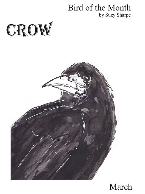 Bird of the Month - March Crow