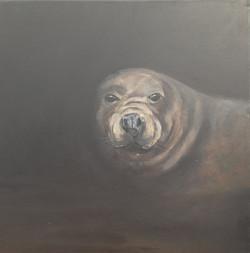 Grey Seal Painting