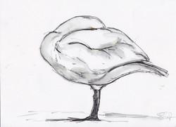26 Beswick Swan copy.jpg