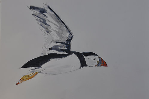 Leaping Puffin