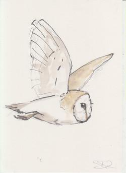 1 Owls (1).jpg