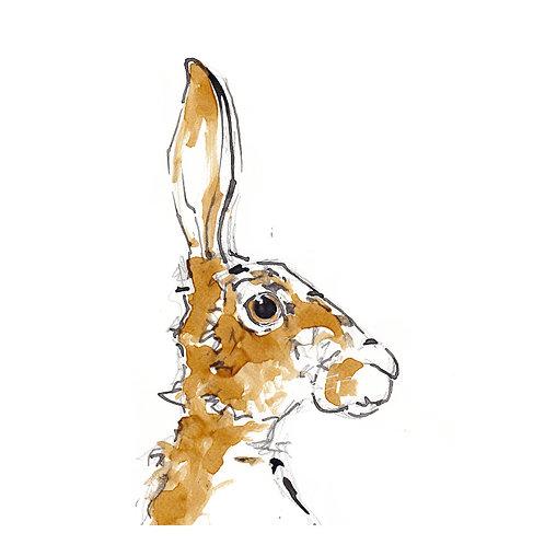 Thomas the Hare