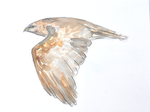 Buzzard Original Painting