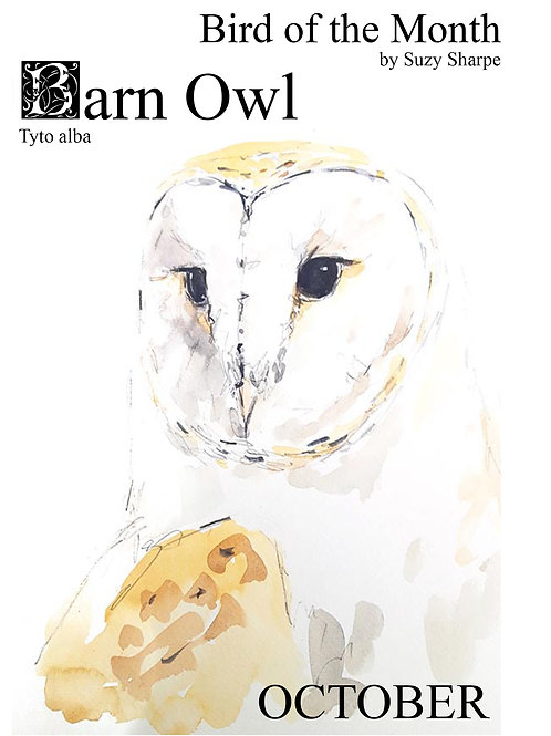 Bird of the Month - October Barn Owl
