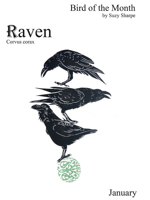 Bird of the Month - January Raven