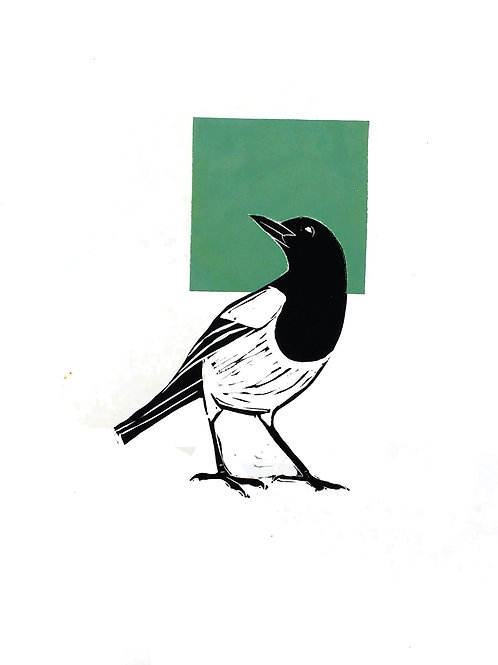 Magpie looking back to a Green Square