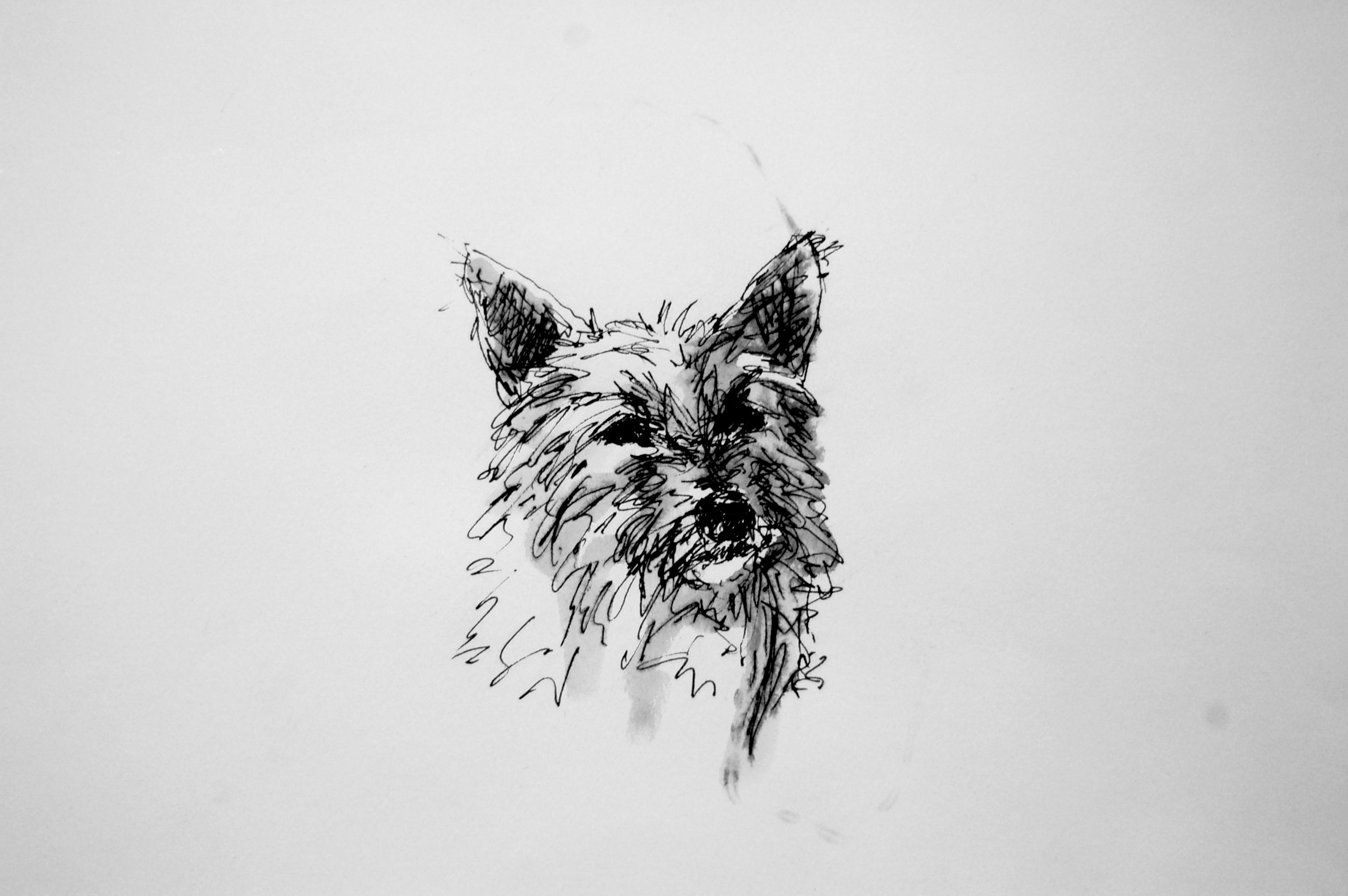 Jack Sketch