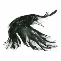 long wings rook