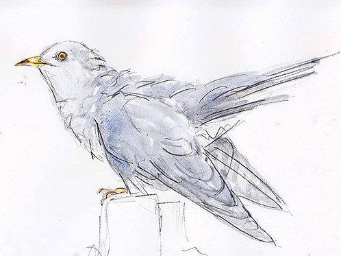 Cuckoo Print