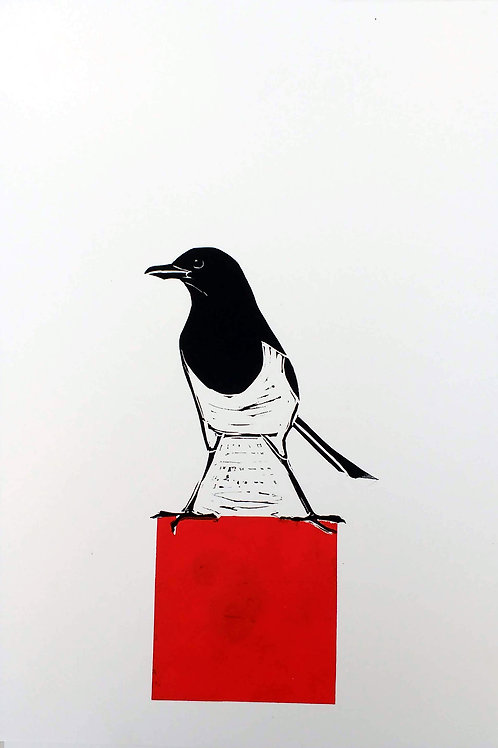 Magpie standing on a Red Square