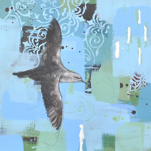 With a Measure of Mystery - Balearic Shearwater - 30 x 30cm on canvas
