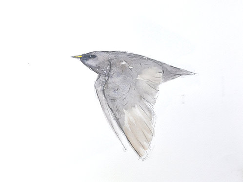 Starling Original Painting