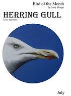 Gull-1cover .jpg