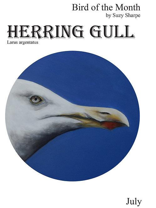 Bird of the Month July - Herring Gull