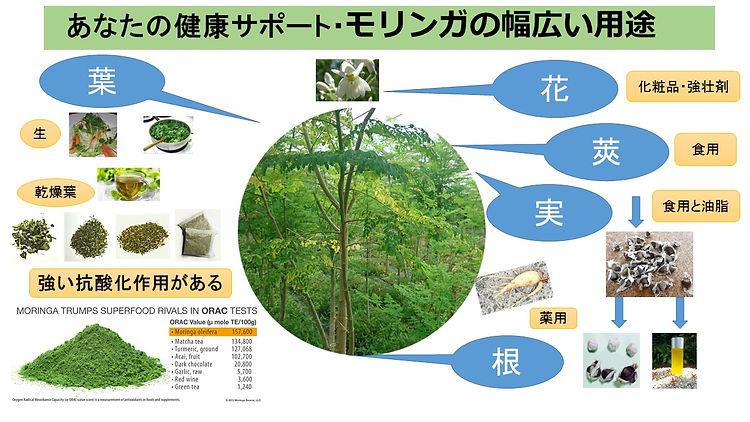 奇跡の木 モリンガの体験者の情報