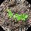 Thumbnail: モリンガ種子 10粒入り