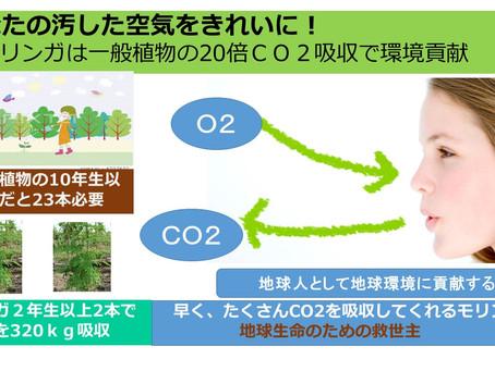 地球のCO2削減に貢献