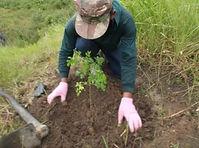 モリンガ苗の植え付け.jpg