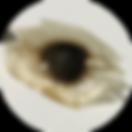 モリンガ種子2_0621092732.png