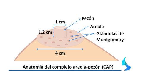 Areola pezon