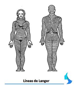 Líneas de Langer, Cirugia mamaria, estetica, aumento