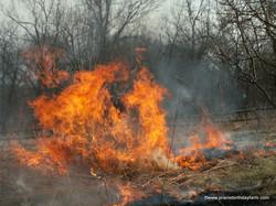 burning the prairie