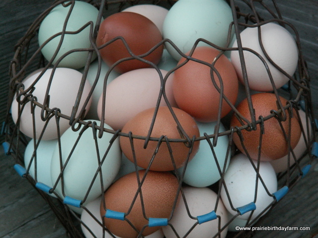 heritage breed chicken eggs