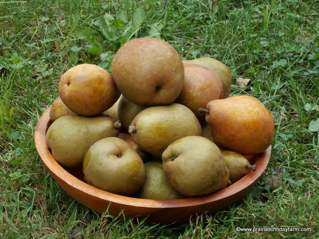 dessert pears