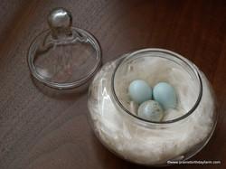 invasive starling eggs