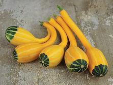 Raresight Farms Melons