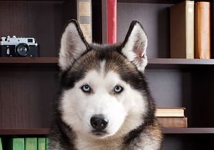 dog with book.jpg