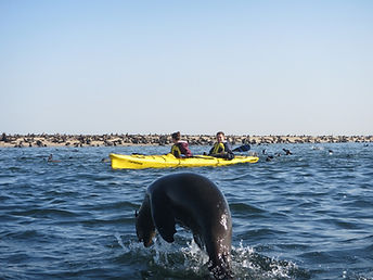 Seal Kayak