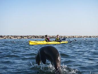 Seal Kayak