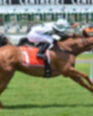 horses-380402_1920.jpg