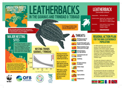 Infographie-luth-EN.jpg