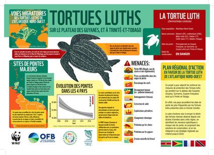 Infographie-luth-FR.jpg