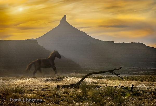utah__Saw_Horse__frank_j_borges_©2014___