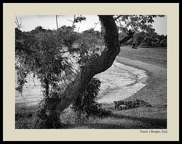 Prudence Tree number 2  web.jpg