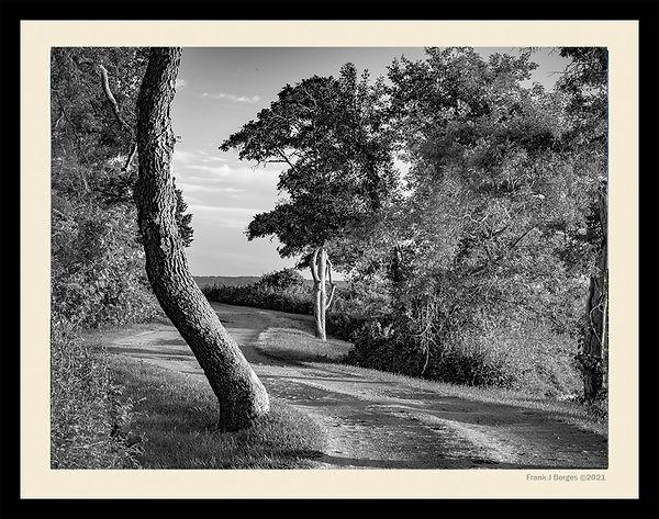 Prudence Tree number 4  web.jpg